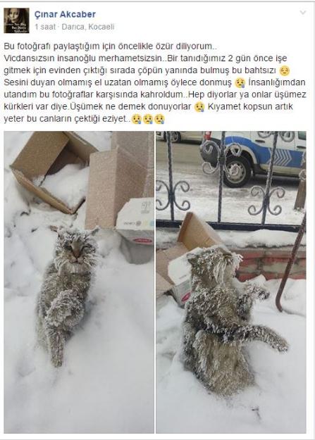 kedi-donan